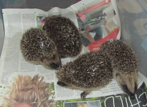 From left to right Tiny, Tickles, Tom and Tilly on 21 July 2013